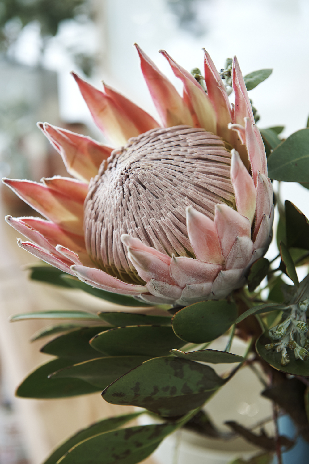 Australian natives, king proteas and gum foliage added a pretty feel to the space and complimented the raw and true theme.