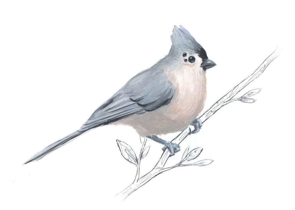 TitMouse-Bird4.jpg