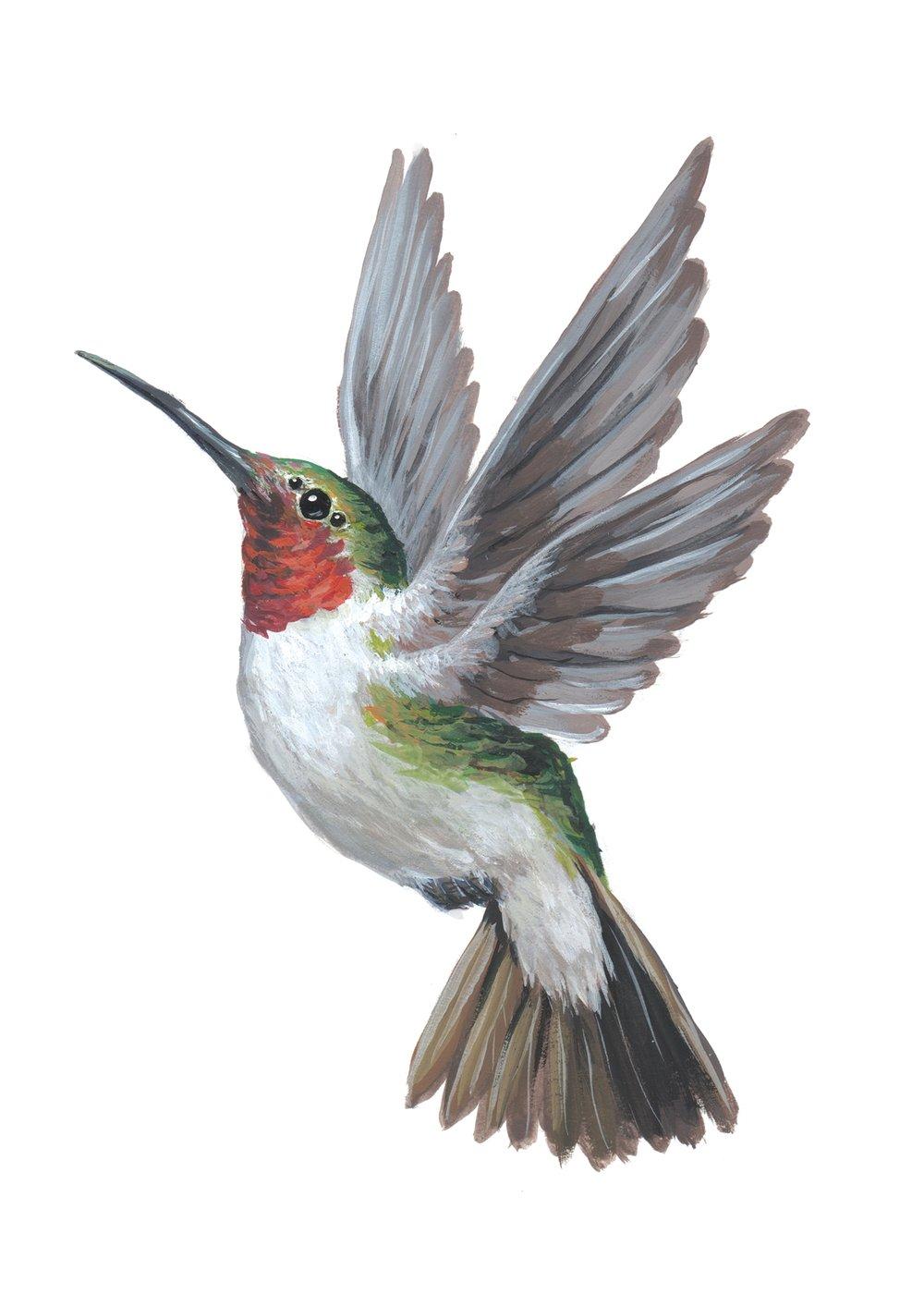 Humming-Bird-6.jpg