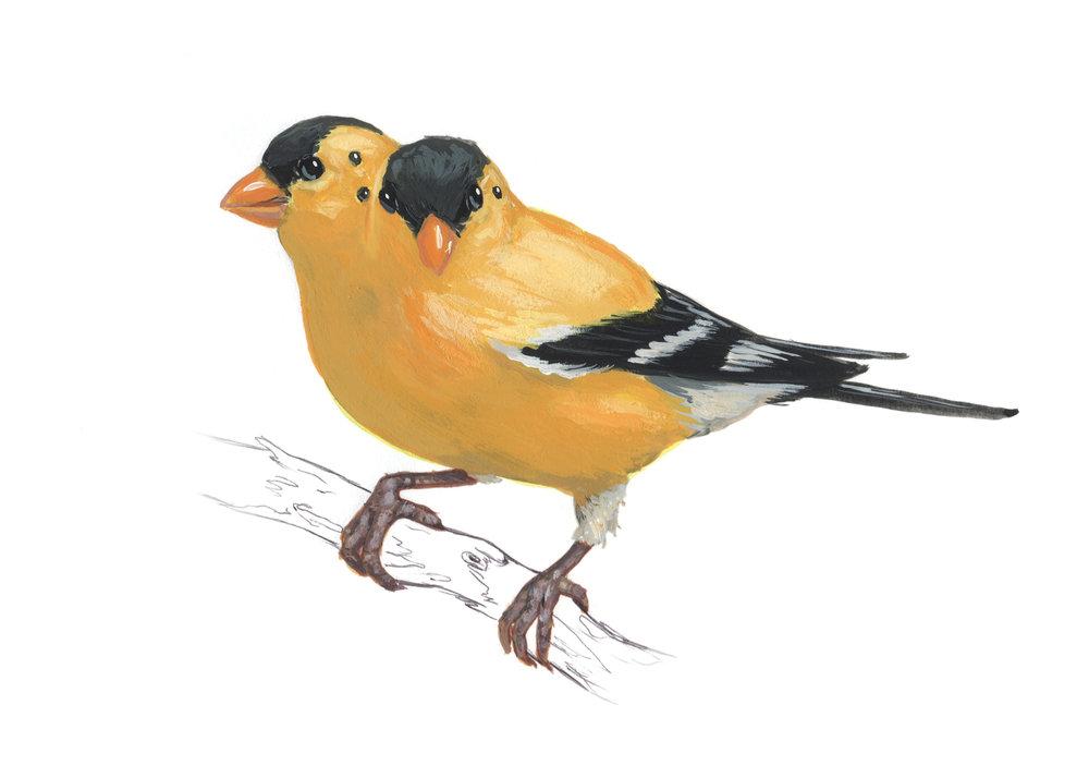 Gold-Bird9.jpg