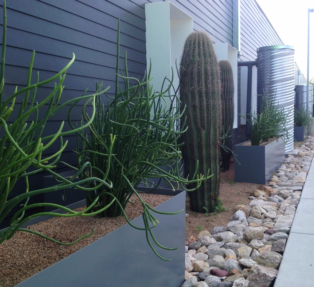 Water harvesting cistern and Saguaro cacti in front of the Habitat for Humanity headquarters.