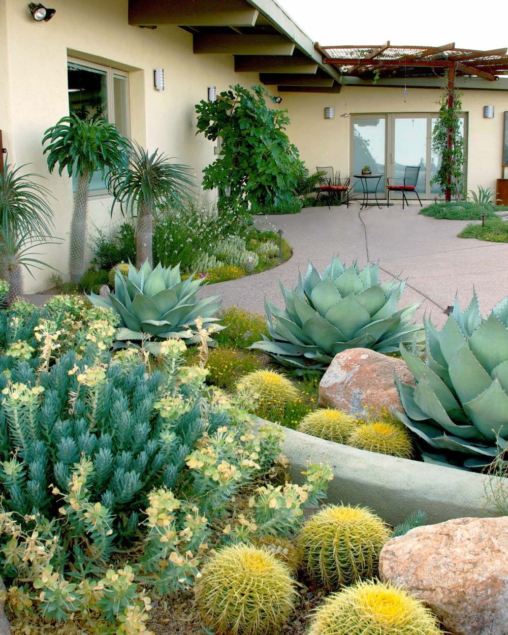Xeriscaping gone wild!