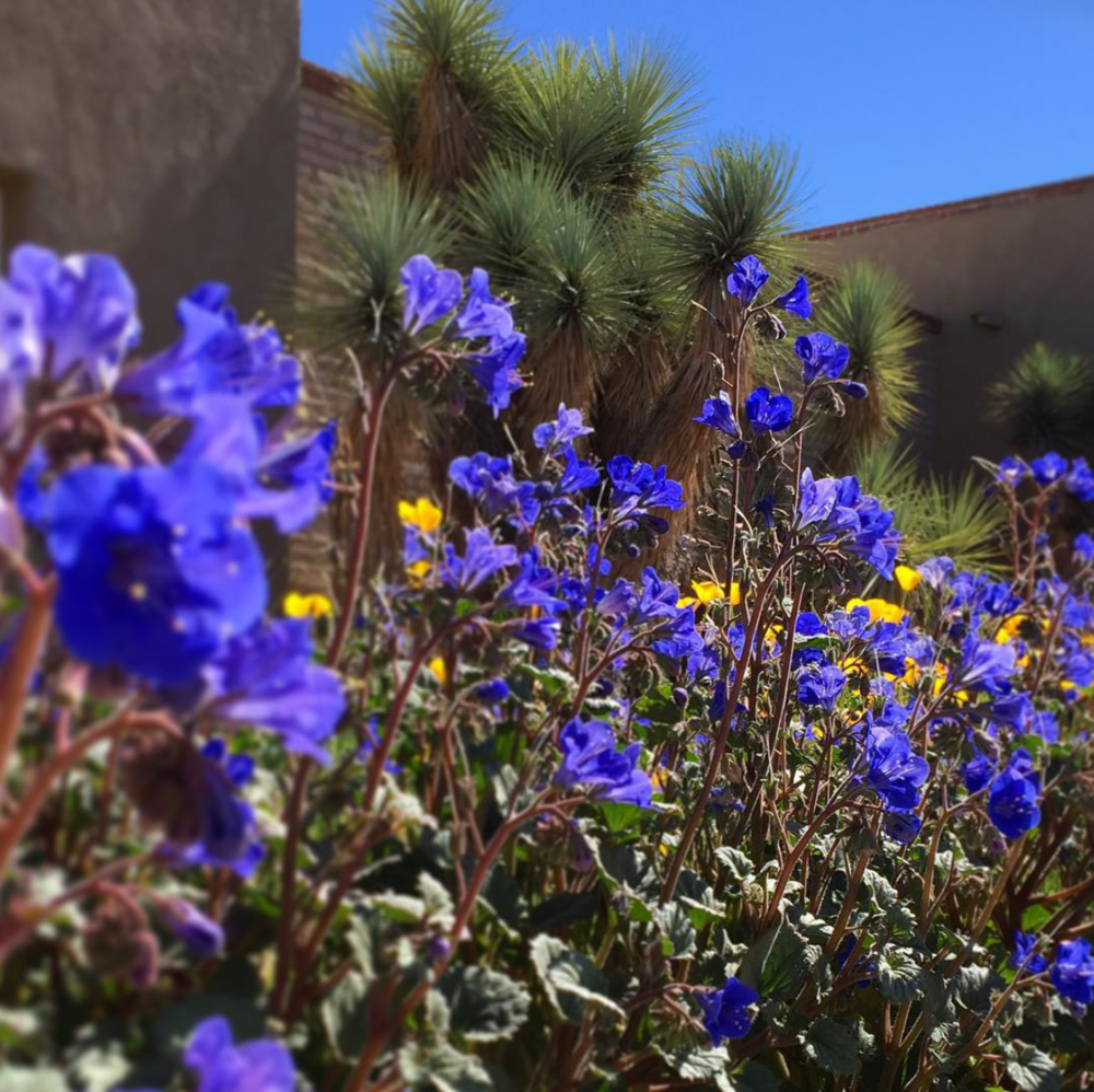 REALM's Tucson Botanical Gardens Project