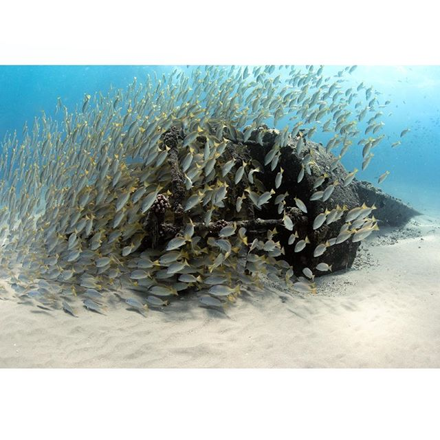 "Because you can't give a tuna sandwich to the fish #fisharefriendsnotfood . . . 📷 @canonusa 6D + 15mm lens + @ikelite housing & 8"" dome port . . . . #racingextinction #savetheocean #exklusive_shot #perfect_oceans #oahu  #beautifuldestinations #stayandwander #discoverearth #team_canon #stokedhawaii #sharks #underwater #photographer #mermaid #savesharks #keepitwild #underwaterphotography #apexpredator #nosharkfinsoup #stopsharkfinning #nosharkculls  #sharksdaily #discoversharks #divetosurvive #freediving #natgeo #natgeoyourshot #teamcanon #underwaterphotography"