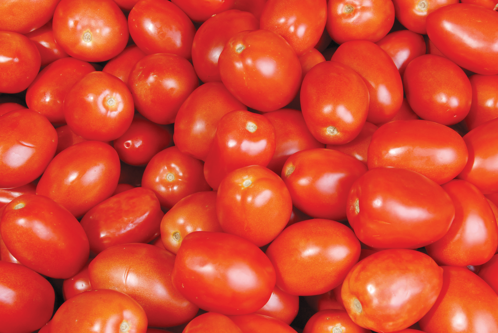 Roma Tomatoes2.png