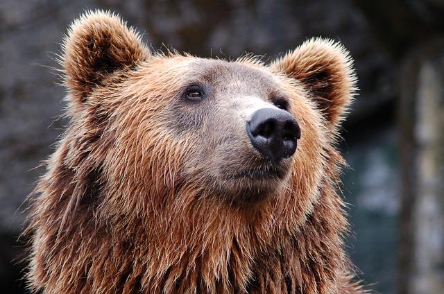 The Bear necessities = 8 hours sleep.