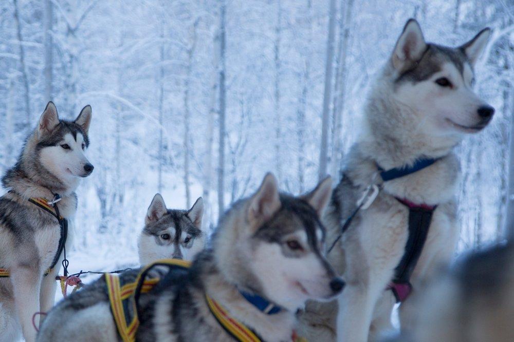 Hondenslee tocht