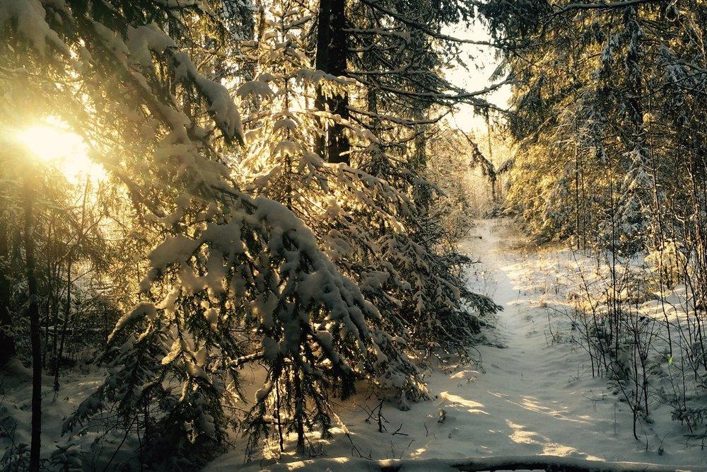 Sneeuwwandeling in de directe omgeving