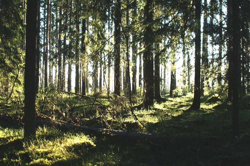 Eindeloze bossen aan de overkant