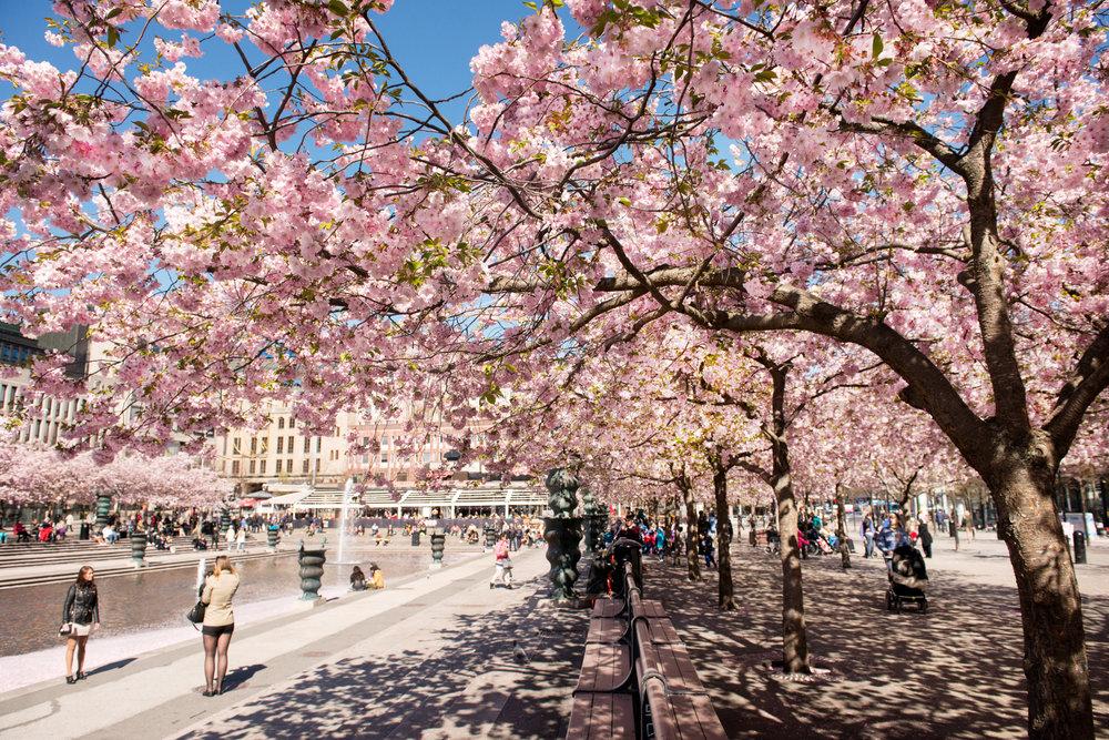 Stockholm, kungsträdgården