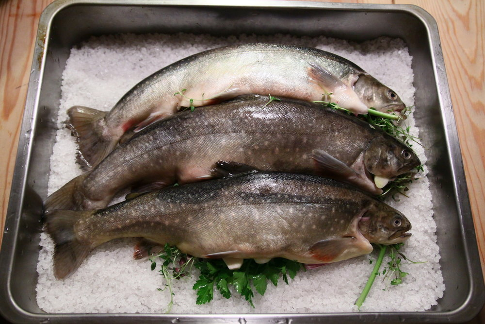 The best fish you'll find at the fish market at Bergvik, Karlstad