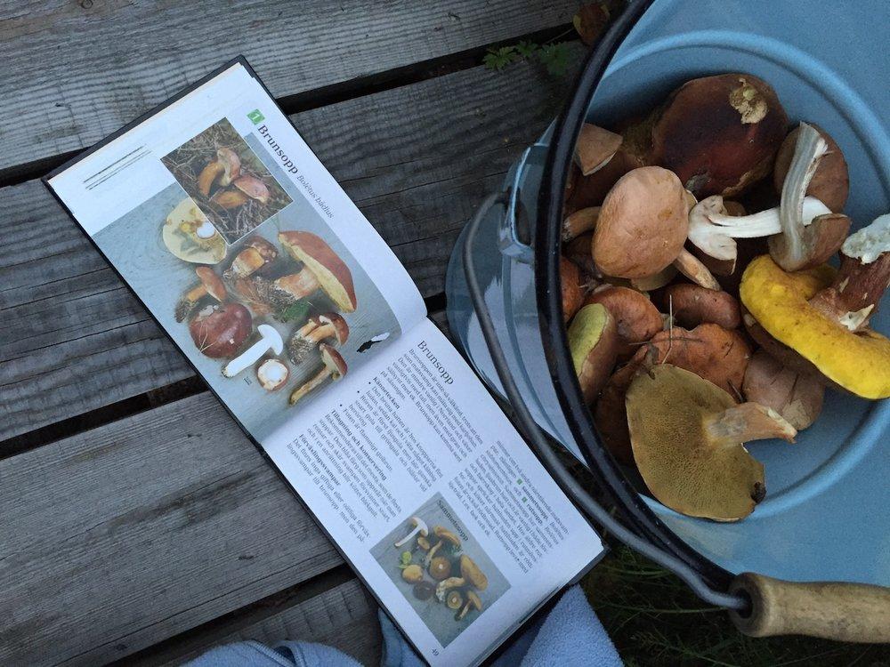 Mushroom fever!