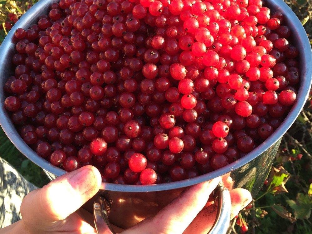 Berries - fresh & sour