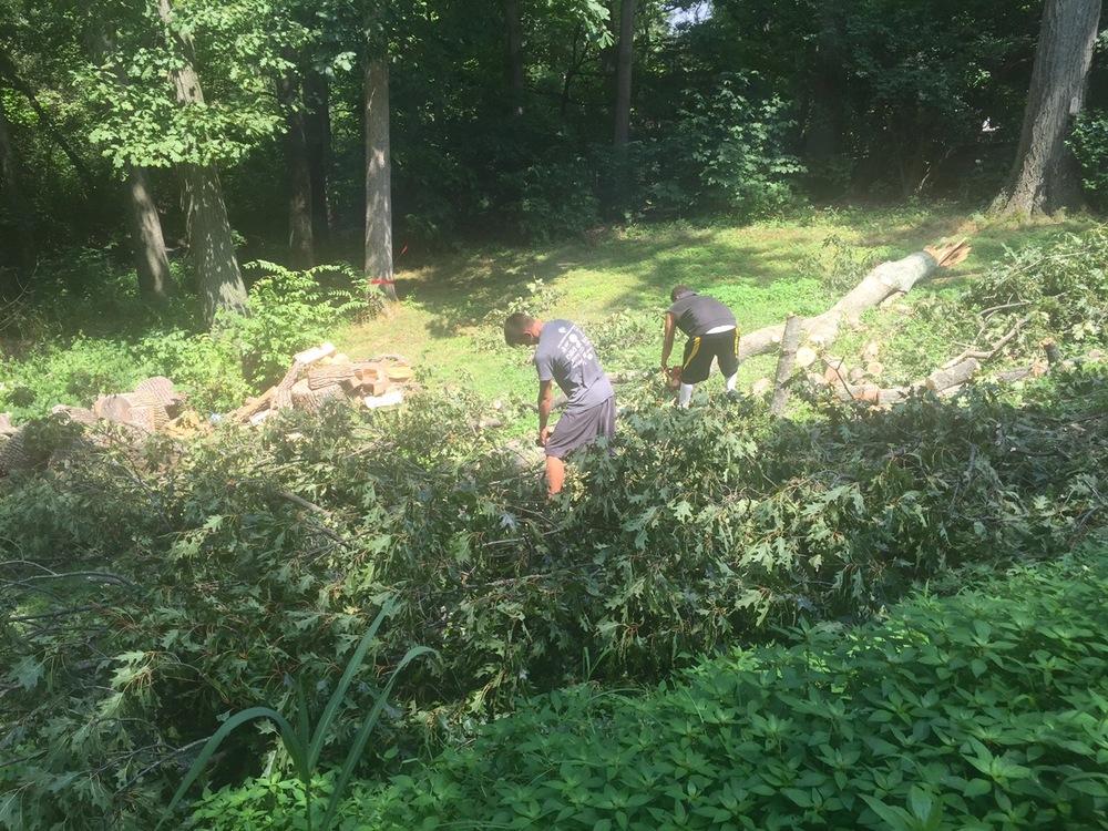 Fallen-Tree-Cincinnati
