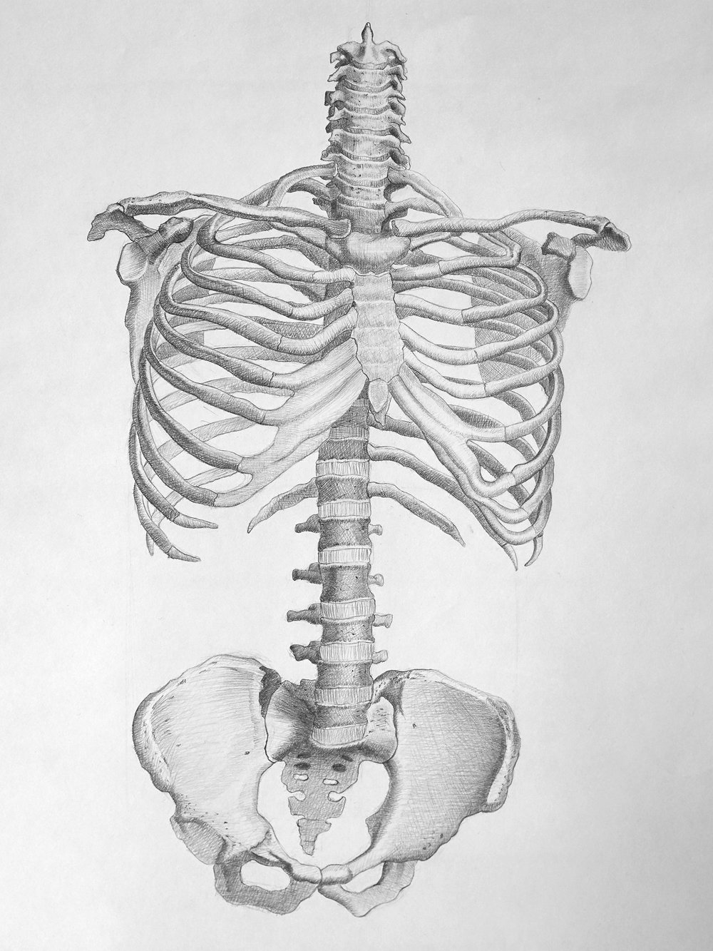 Human Anatomy Study Dara Hamidi