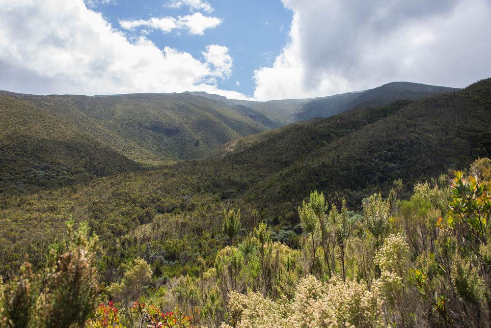 Moorland Heather Zone