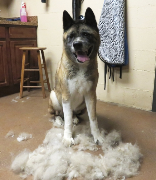 Deshed Dog Groom.jpg