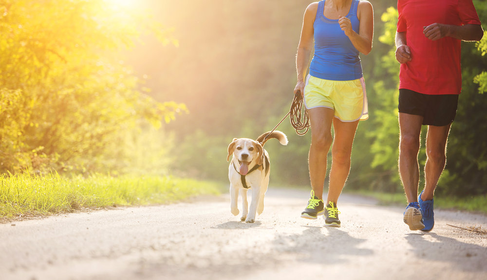 graphicstock-active-seniors-running-with-their-dog-outside-in-green-nature_SRlcc-yRb-.jpg