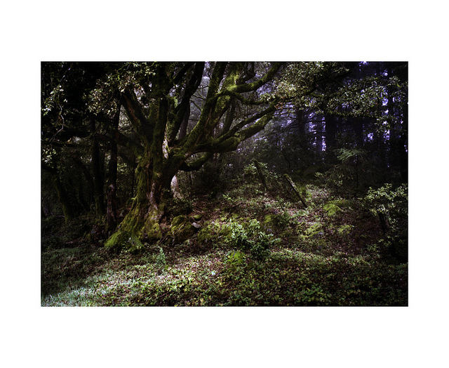 williamhessphoto :      Santa Cruz Mountains, CA      My assistant made this photo while we were in CA for Helzberg. He is pretty damn good.