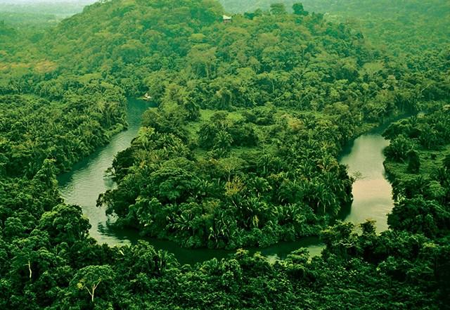southern-belize-rainforest.jpg