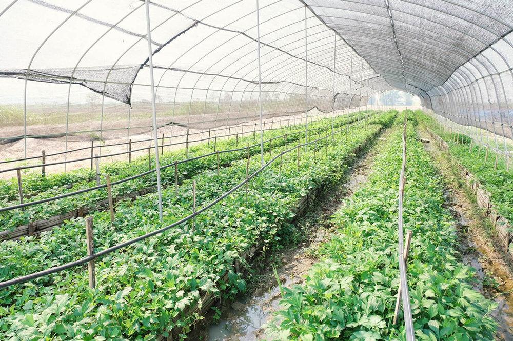 Organic farm -