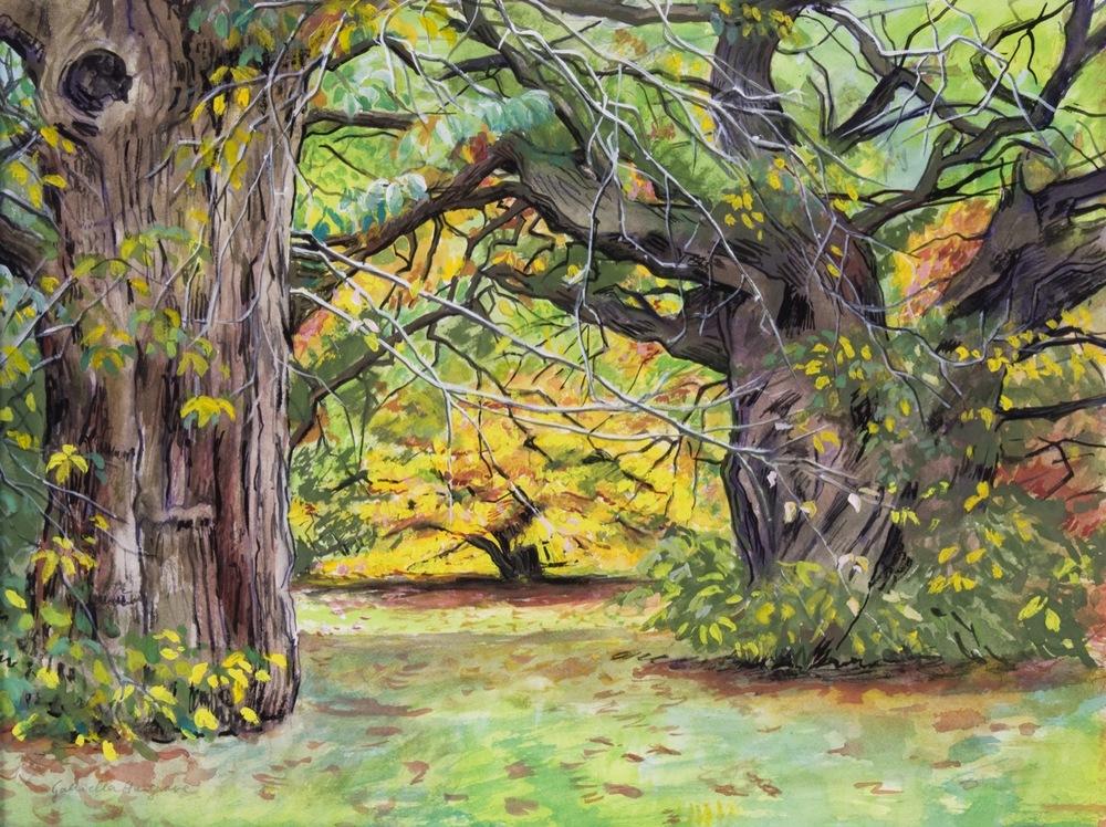 Sheffield Park, Autumn Trees