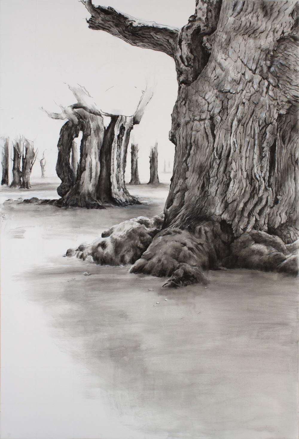 Old Trees 2 - Hatfield