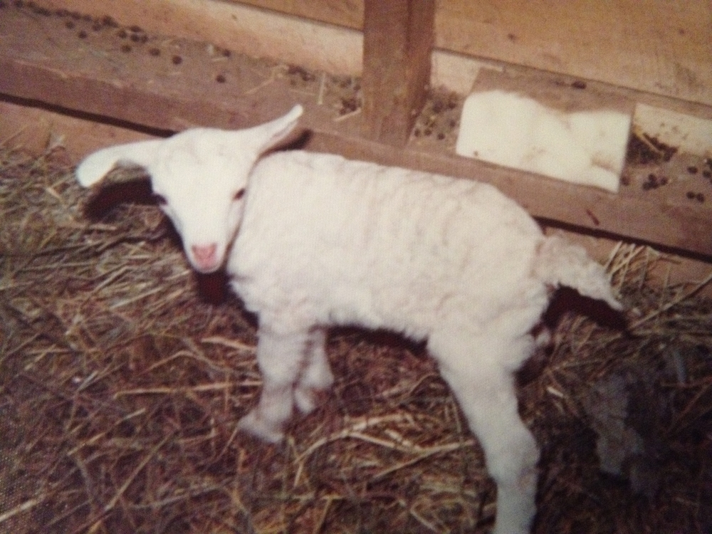 Milkyway the day she was born.JPG