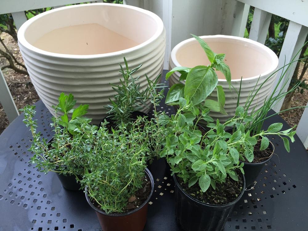 Urban Herb Garden Across Our Table