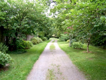 Driveway with Daphnis tree peonies, september