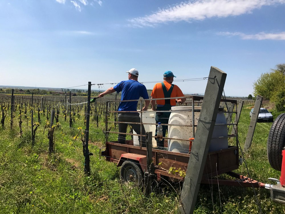 Horst's colleagues spraying the 500 in the vineyard