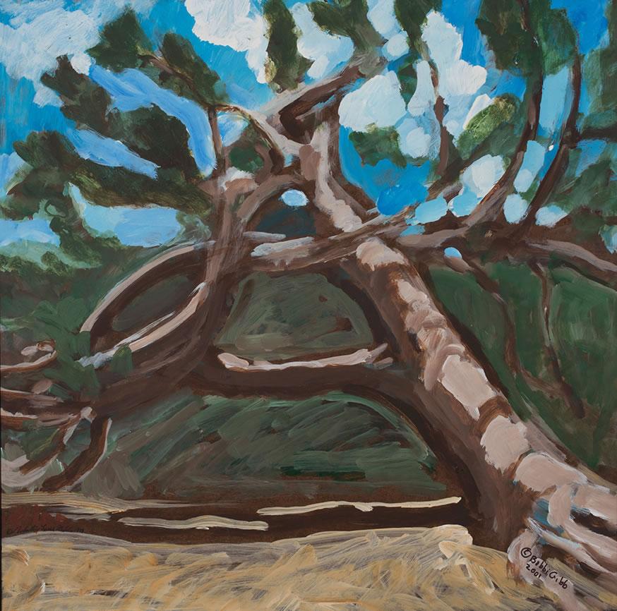 24 x 24 Torrey Pine.jpg