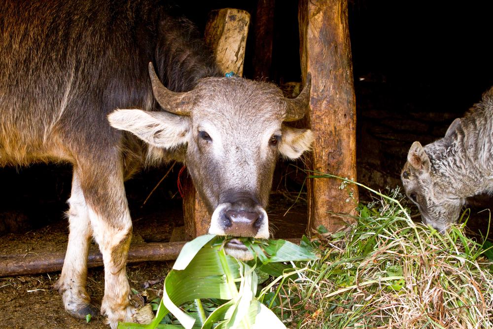 9_Nepal.jpg