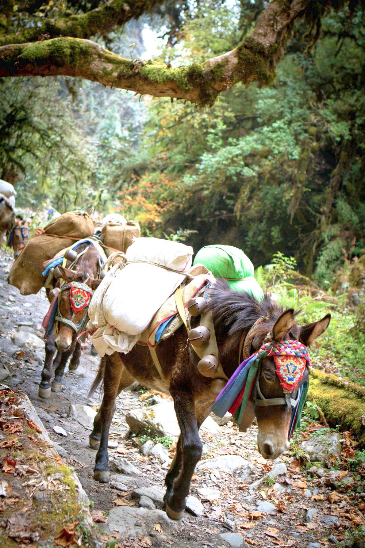34_Nepal.jpg