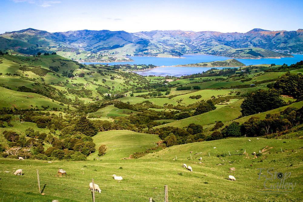 NZ6.jpg