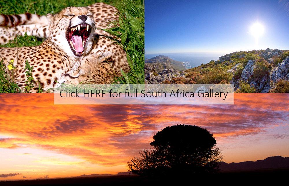 SA Cover Photo.jpg