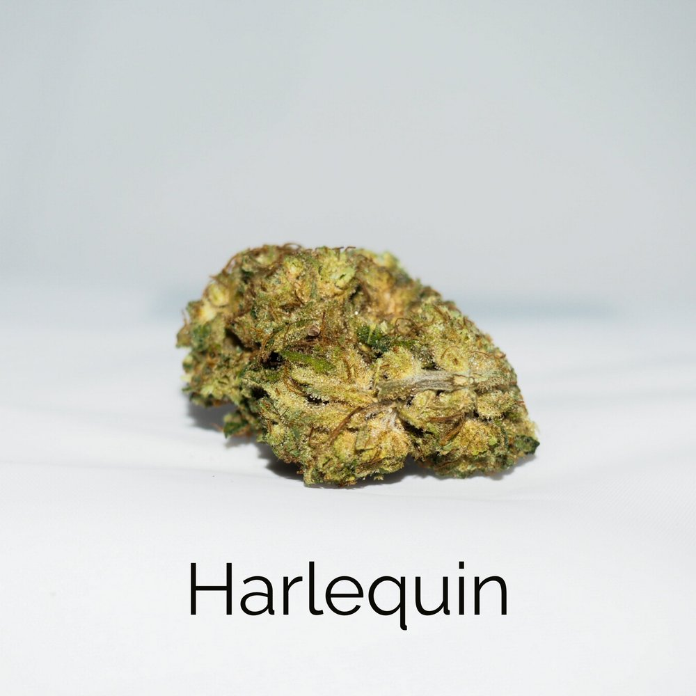 New Life - Harlequin