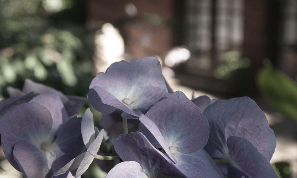 Genießen Sie beim Training den Blick in den Garten und bringen Sie Körper, Geist und Seele in Einklang