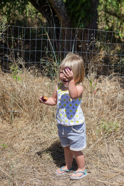 plum picking-2.jpg