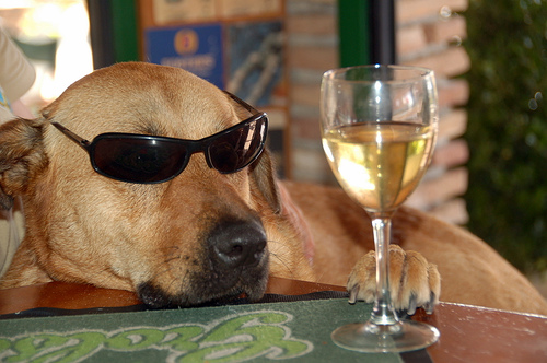 Pet My Dog And Drink Wine