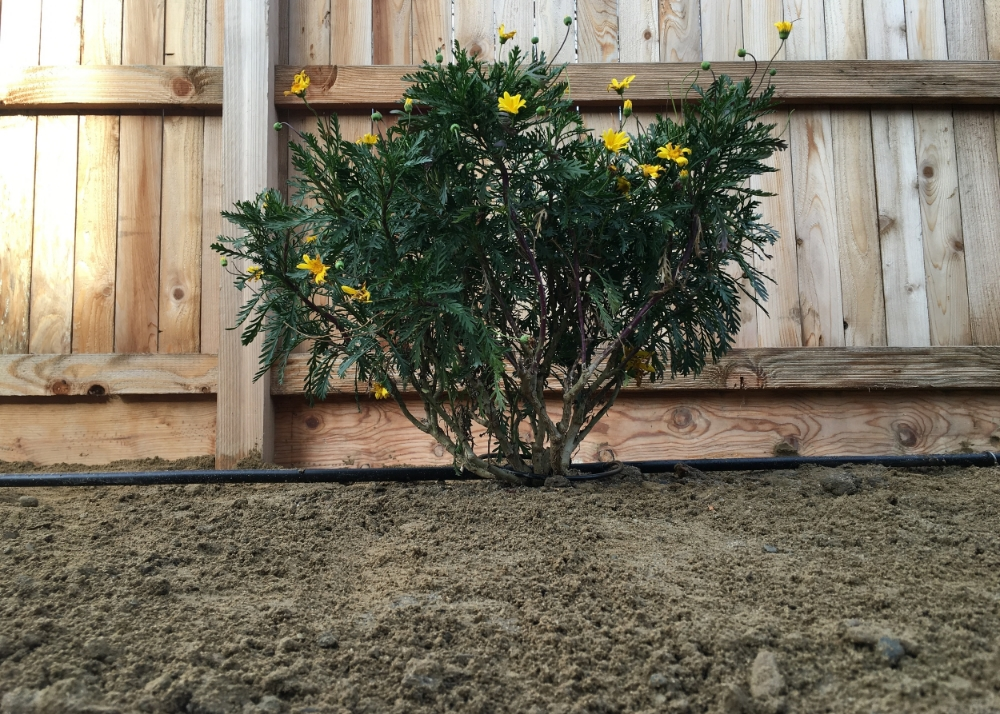 Shrub Management -