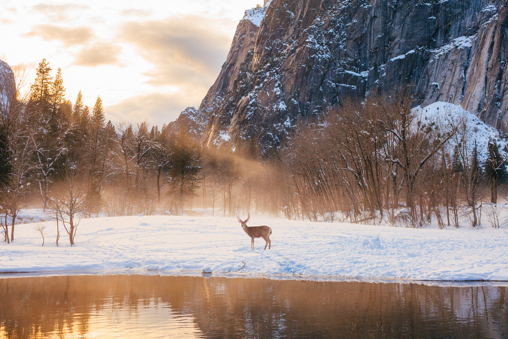 Yosemite-Valley-Deer-Sunrise-Pond