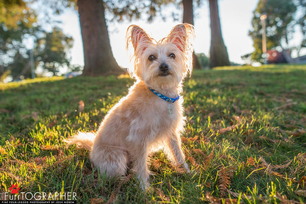 Small-white-dog-on-grassy-hill-photographer
