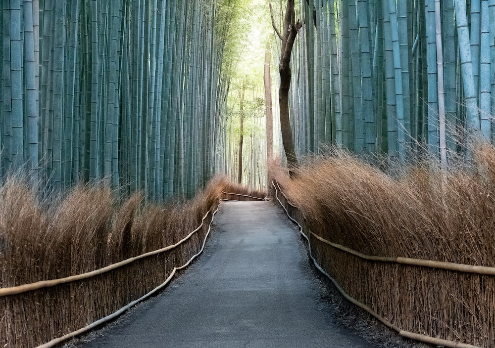 bamboo lined path way