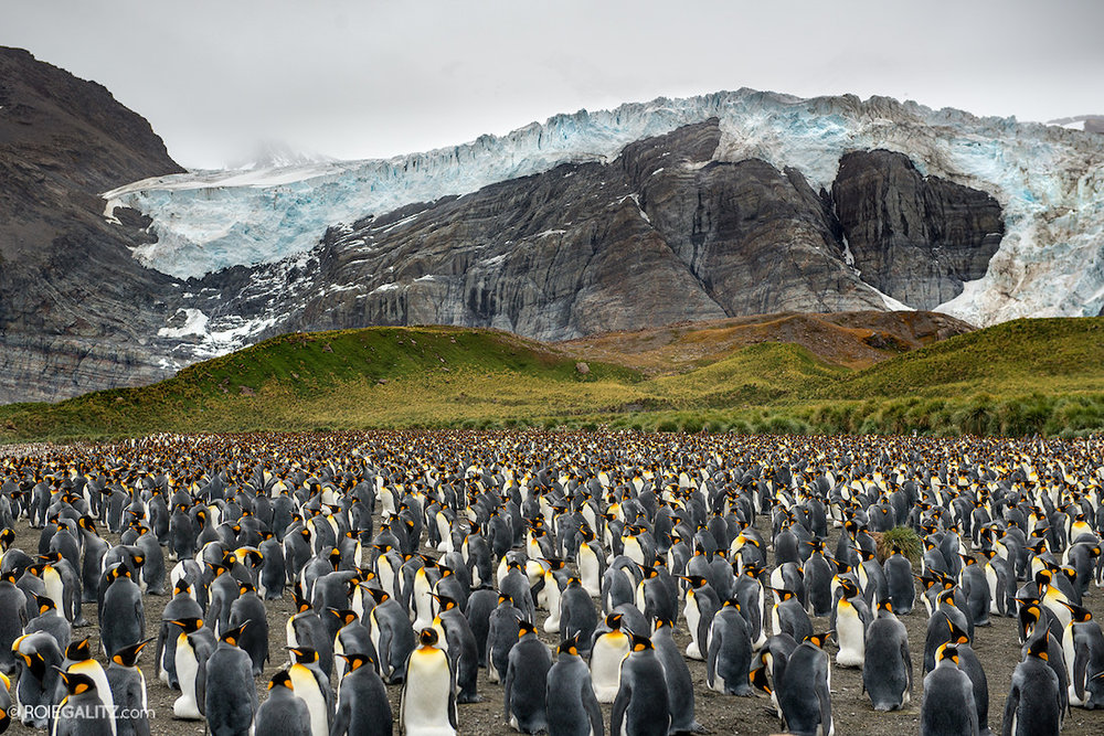 penguins at base of glacier
