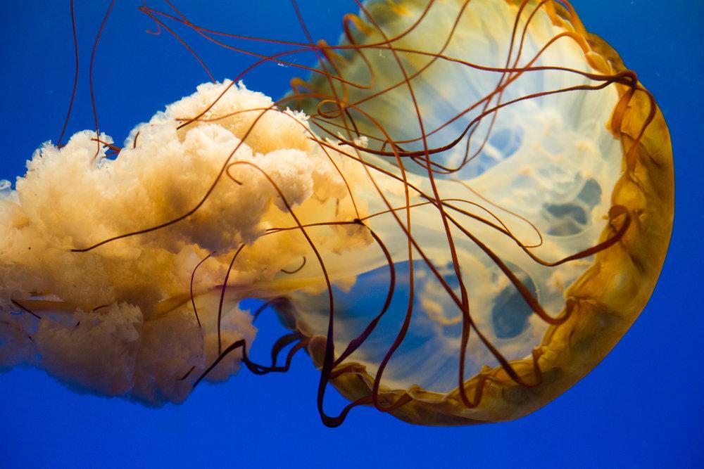 Baltimore Inner Harbor and National Aquarium (c) My3GirlsPhotography May 2017-11.jpg