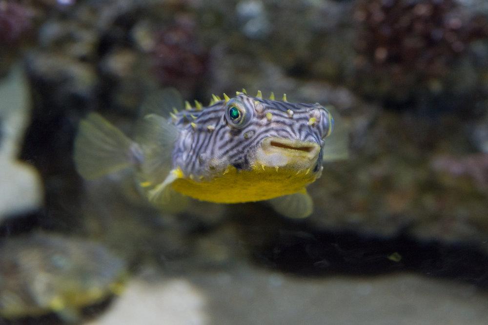 Baltimore Inner Harbor and National Aquarium (c) My3GirlsPhotography May 2017-22.jpg