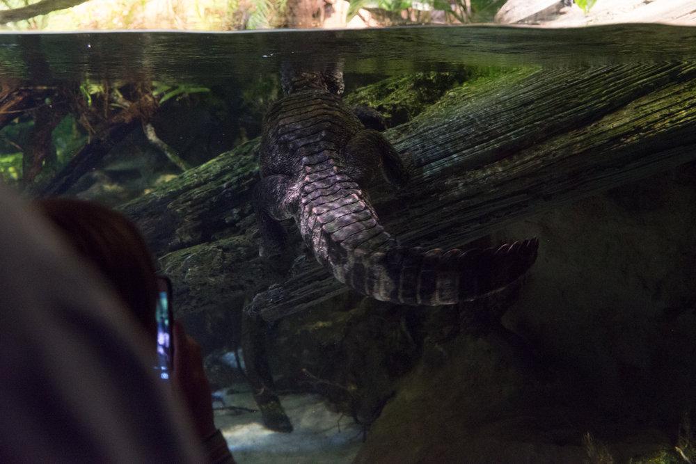Baltimore Inner Harbor and National Aquarium (c) My3GirlsPhotography May 2017-28.jpg