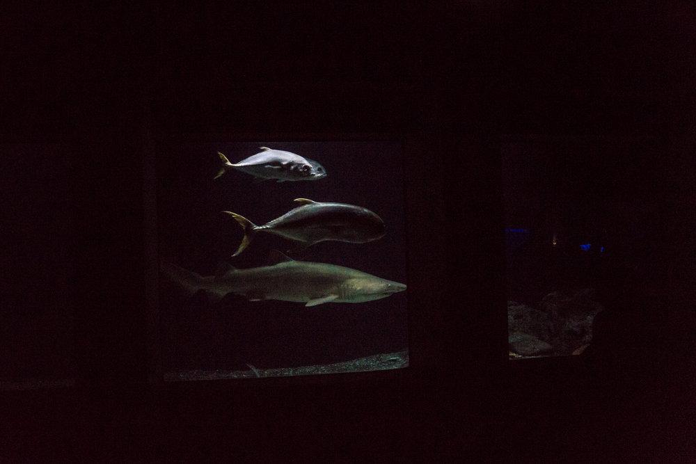 Baltimore Inner Harbor and National Aquarium (c) My3GirlsPhotography May 2017-34.jpg