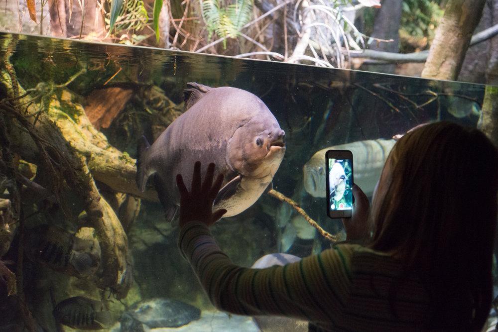 Baltimore Inner Harbor and National Aquarium (c) My3GirlsPhotography May 2017-27.jpg